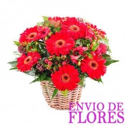 Cesta de 10 Flores Gerberas Rojas
