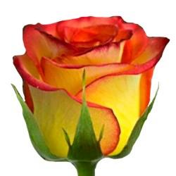 Rosas Circus