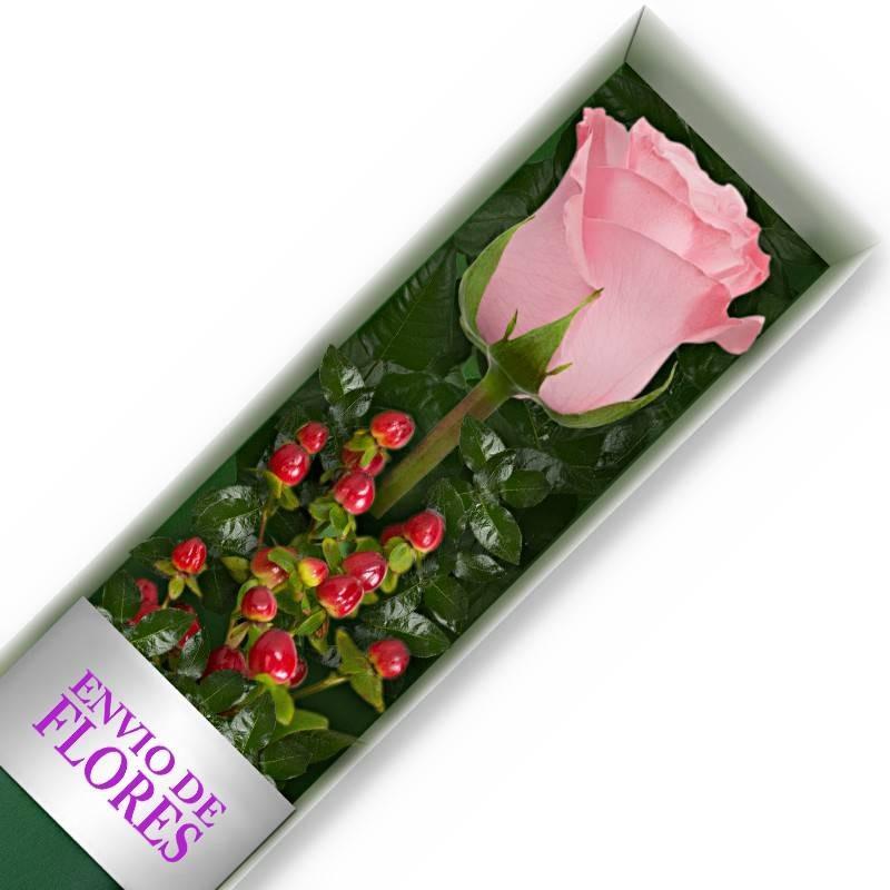 Caja de 1 Rosa Rasada